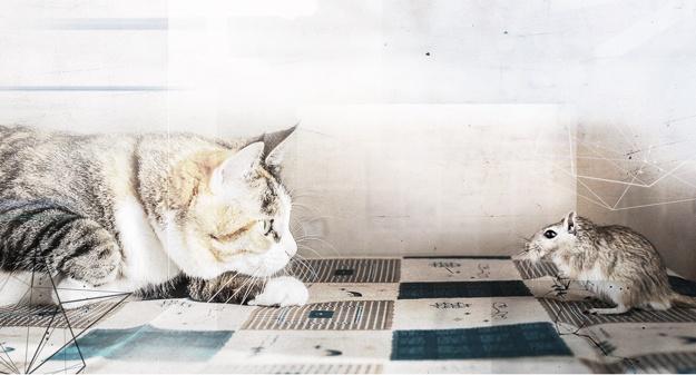 cat-mouse-mobile.jpg
